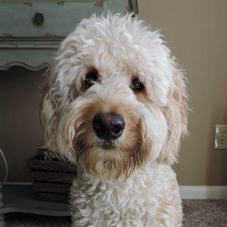 Harper Profile Image