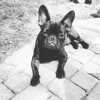 Ernest Profile Image