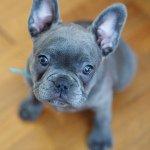 Little Marlowe Profile Image