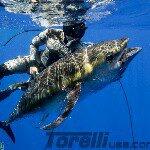 TEAM TORELLI USA  Profile Image