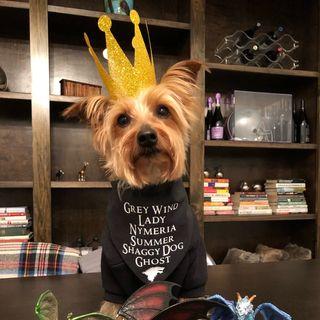 Hops The Bar Dog (+ Porter ) Profile Image