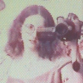 Hannah Siegfried  Profile Image