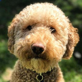 Crosby Profile Image