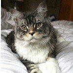 Lou Cat Profile Image