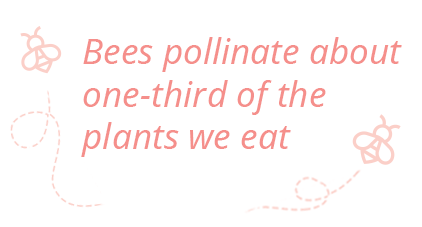 bees pollinate about one-third of the plants we eat