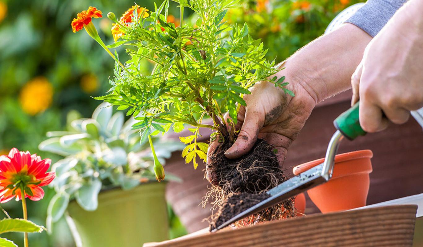 Le jardinier paresseux (bientot)