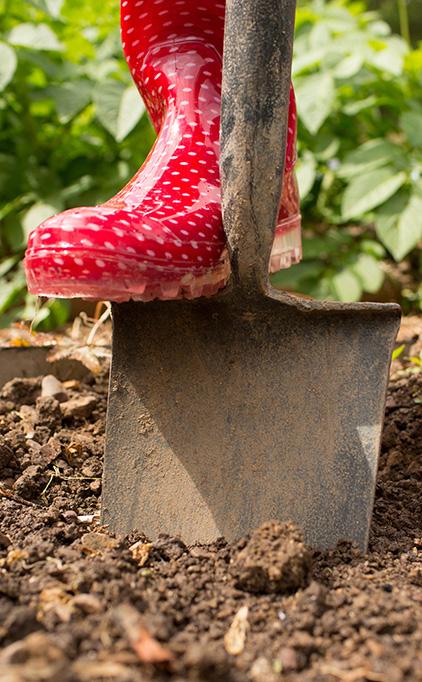 Le jardinier paresseux