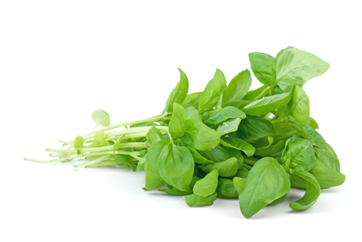 Picture of Basil Bunch - 1 each