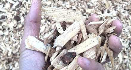 Wood Chips for Paper and Fuel