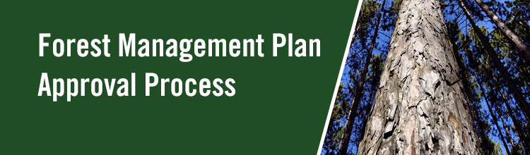 Forest Management Plan Approval Process