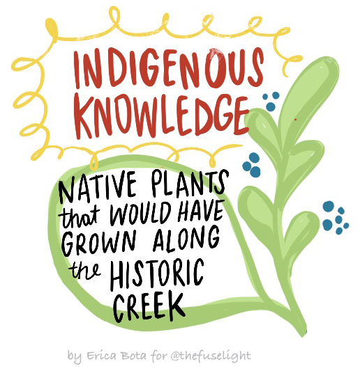 """Icon that reads """"Indigenous knowledge: Native plants that would have grown along the historic creek"""""""