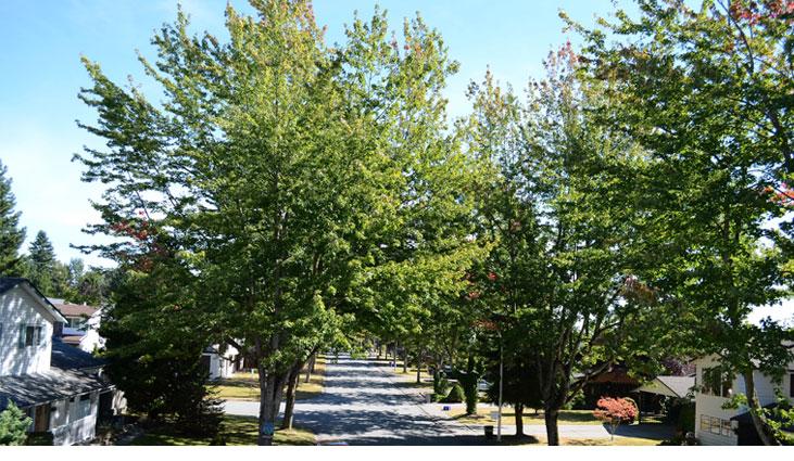 Trees lining a street in a residential neighbourhood