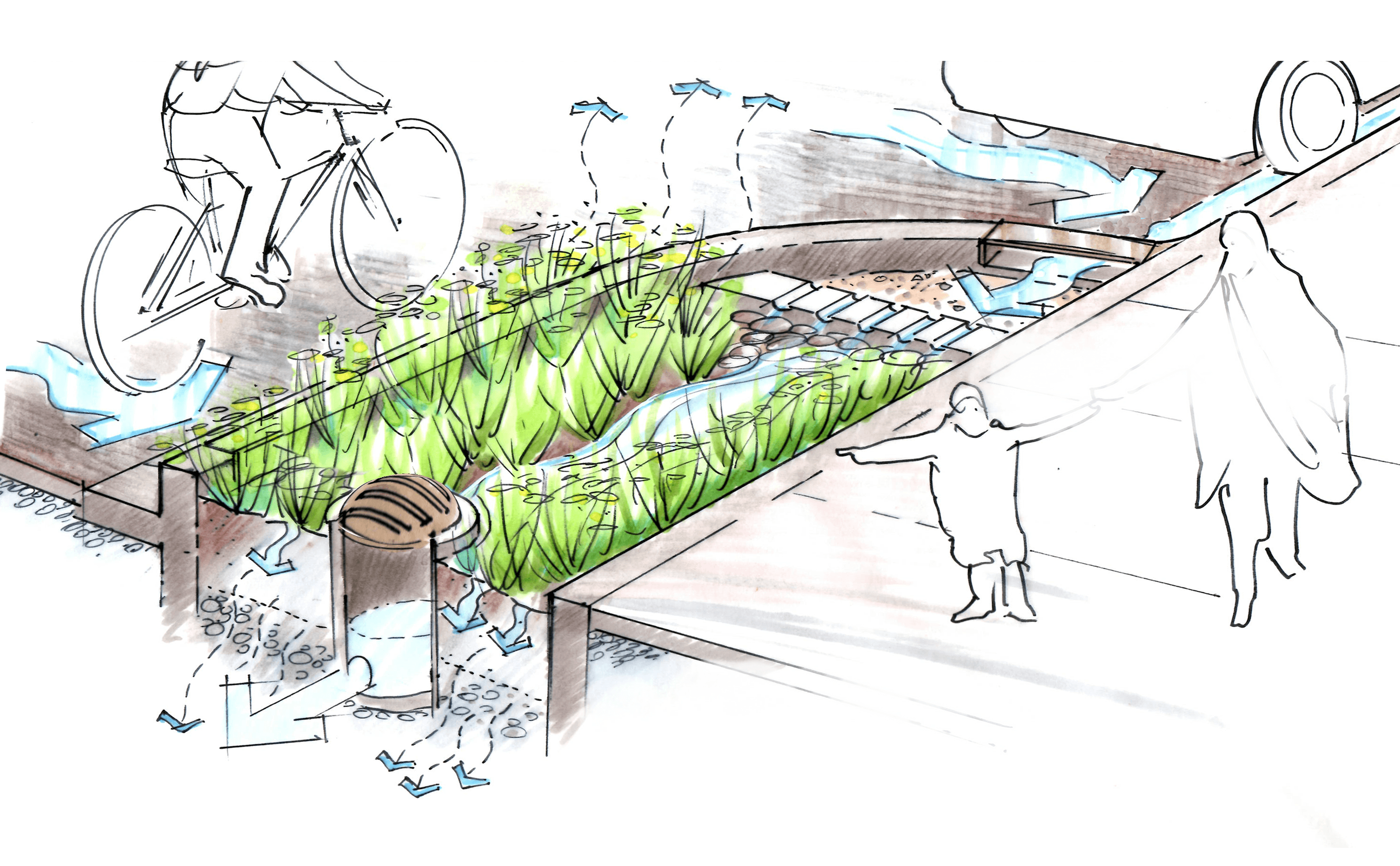 Drawing of a rain garden