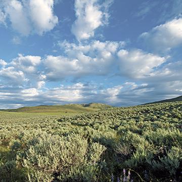 Kilpoola grasslands