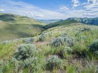14 kilpoola grasslands 3 resize