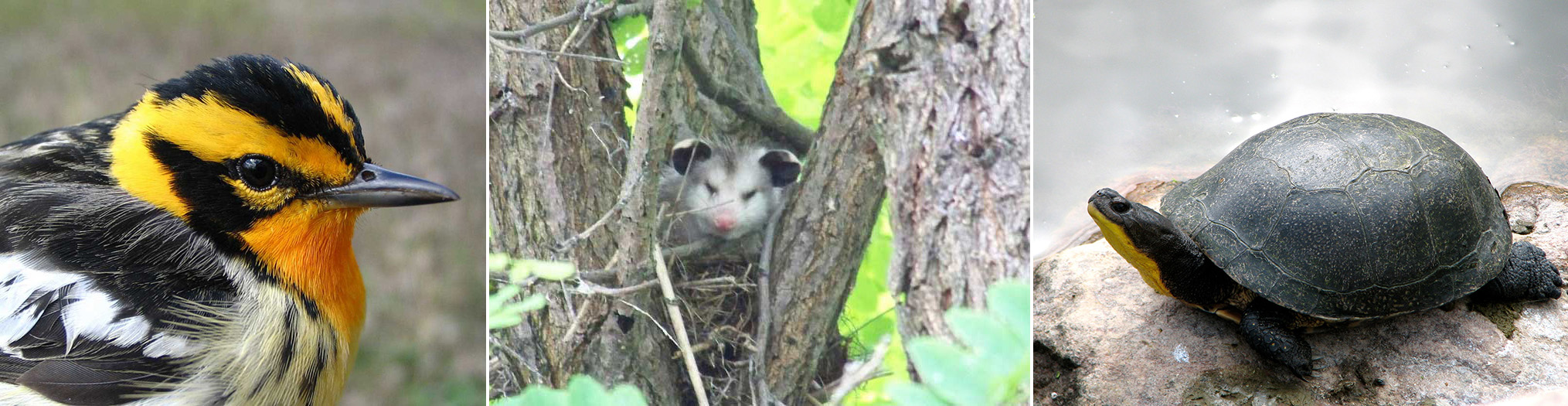 The connection between plants and animals in the spruce forest