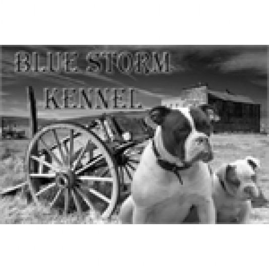 Élevage Alapaha Blue Blood Bulldog Blue Storm Kennel Alapaha