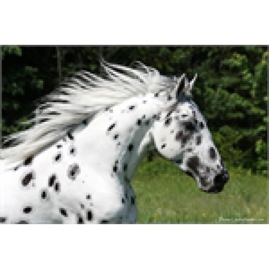 Écurie Appaloosa Double L Ranch
