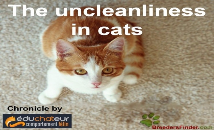 The uncleanliness in cats