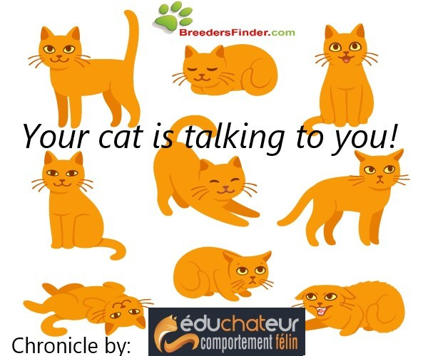 Your cat is talking to you ! - Éduchateur chronicle