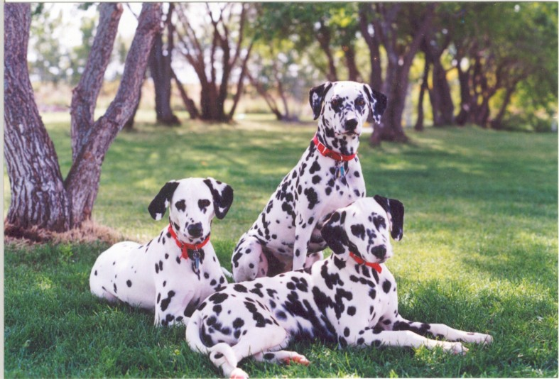 Breeder Echo View Dalmatians