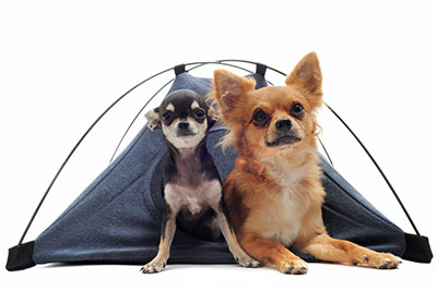 Camping with pets allowed