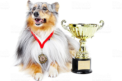 Salon and competition