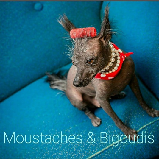 Salon de toilettage Moustaches et Bigoudis