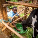 Links to #PasstheMilk Update: Felix got a cow!