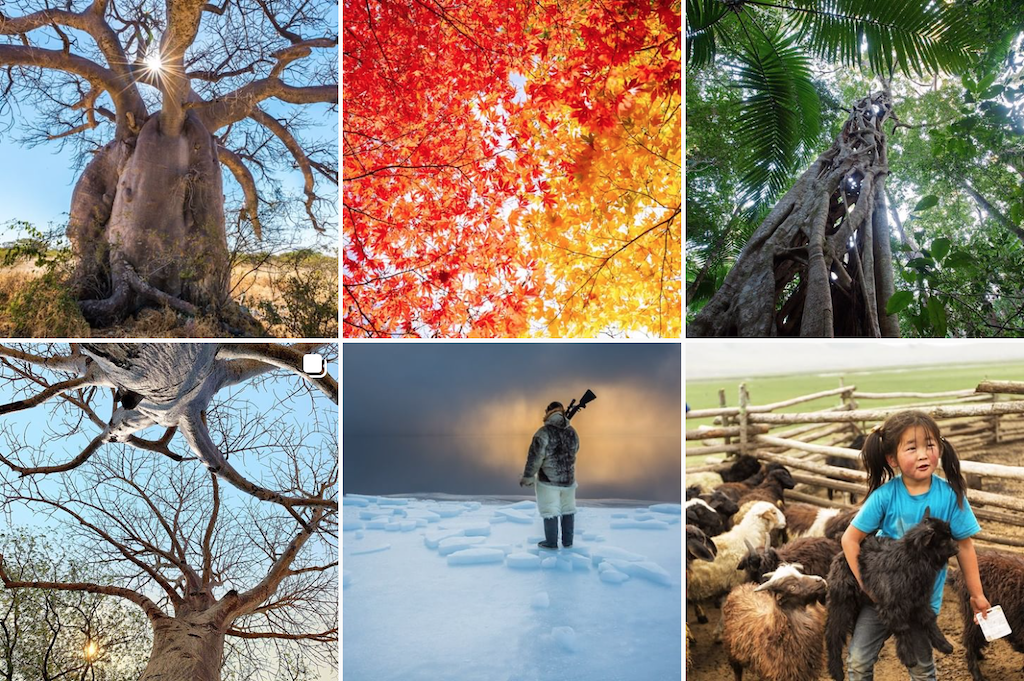 A grid of photos from National Geographic's Instagram account.