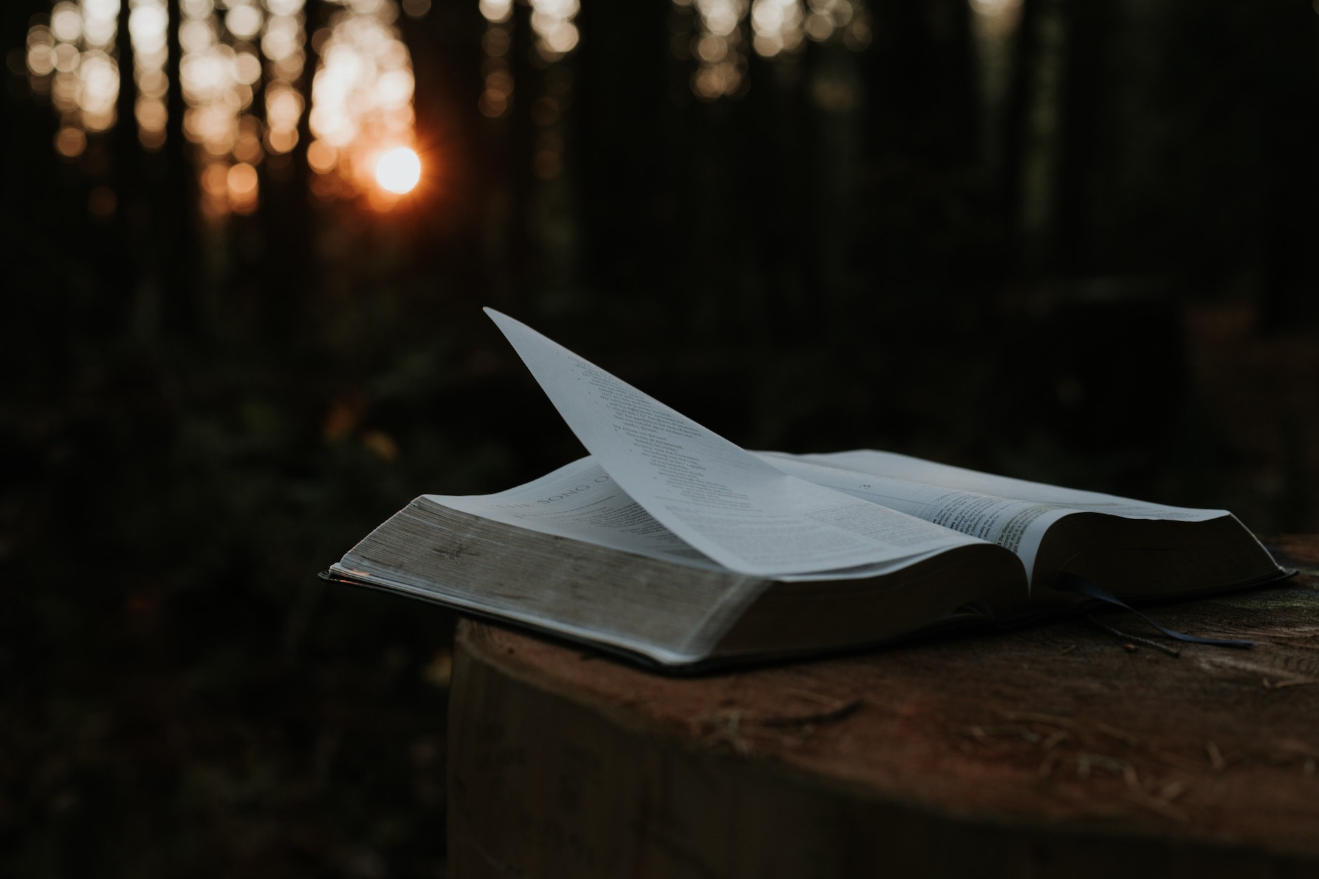 A open bible on a table in a forest.