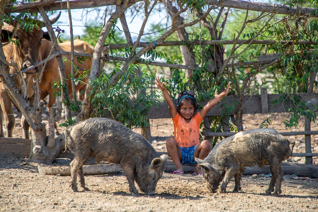 Little girl wearing orange shirt raises her arms with pigs grazing in front of her.