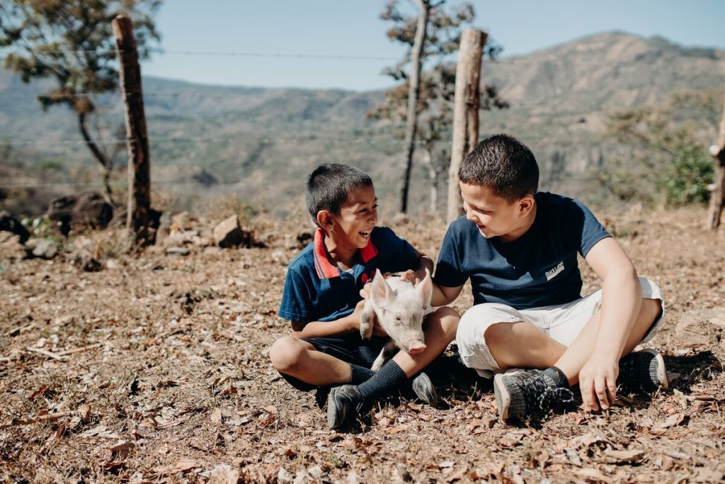 Two little boys sit together with a pig in the middle of them