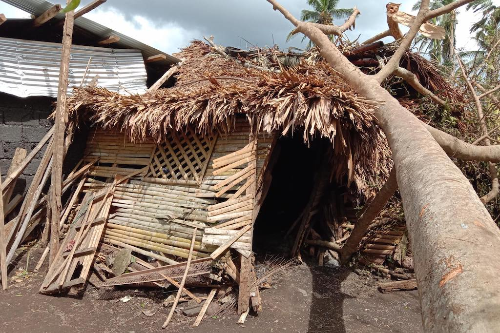 A mangled bamboo home, crushed by a tree.