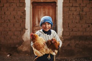 A boy in a striped shirt and blue beanie holding two chickens in his arms.