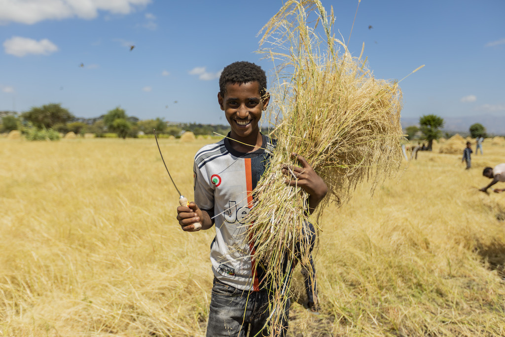 A teenage Ethiopian boy stands with an armful of harvested wheat, and a harvesting tool in the other hand. He is wearing a grey sports shirt and jeans, and is smiling.