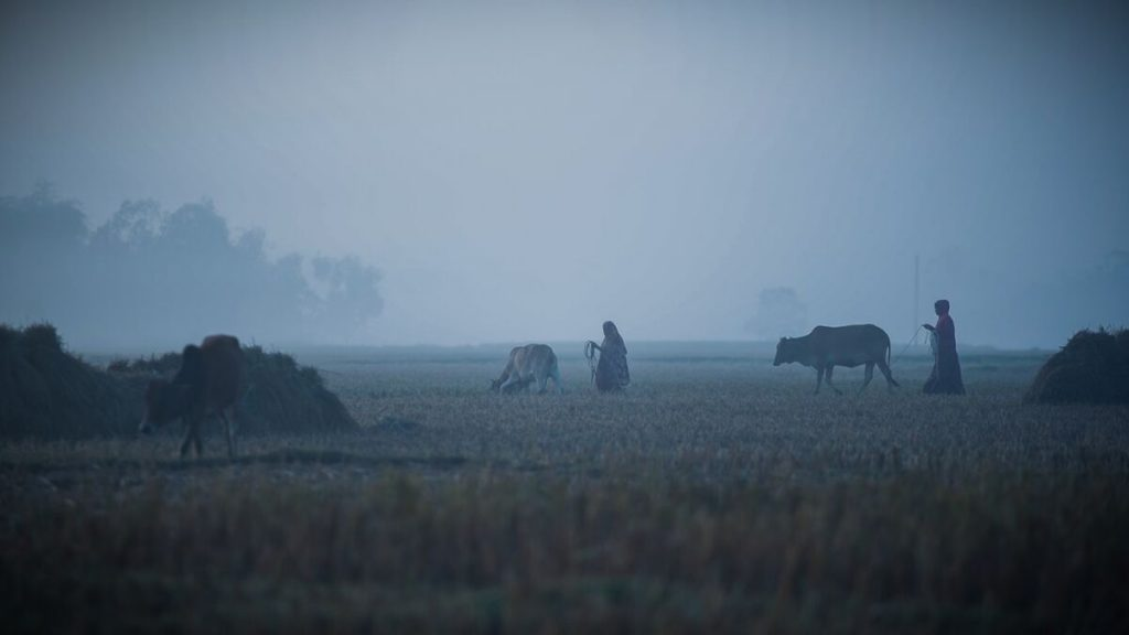 A foggy scene of women working in the fields early in the morning