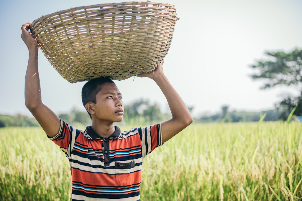 In Bangladesh, 16-year-old Rik is wearing a red and black striped shirt and is standing in a field holding a basket on his head that he uses to gather grass in. He uses the grass to feed his cow.