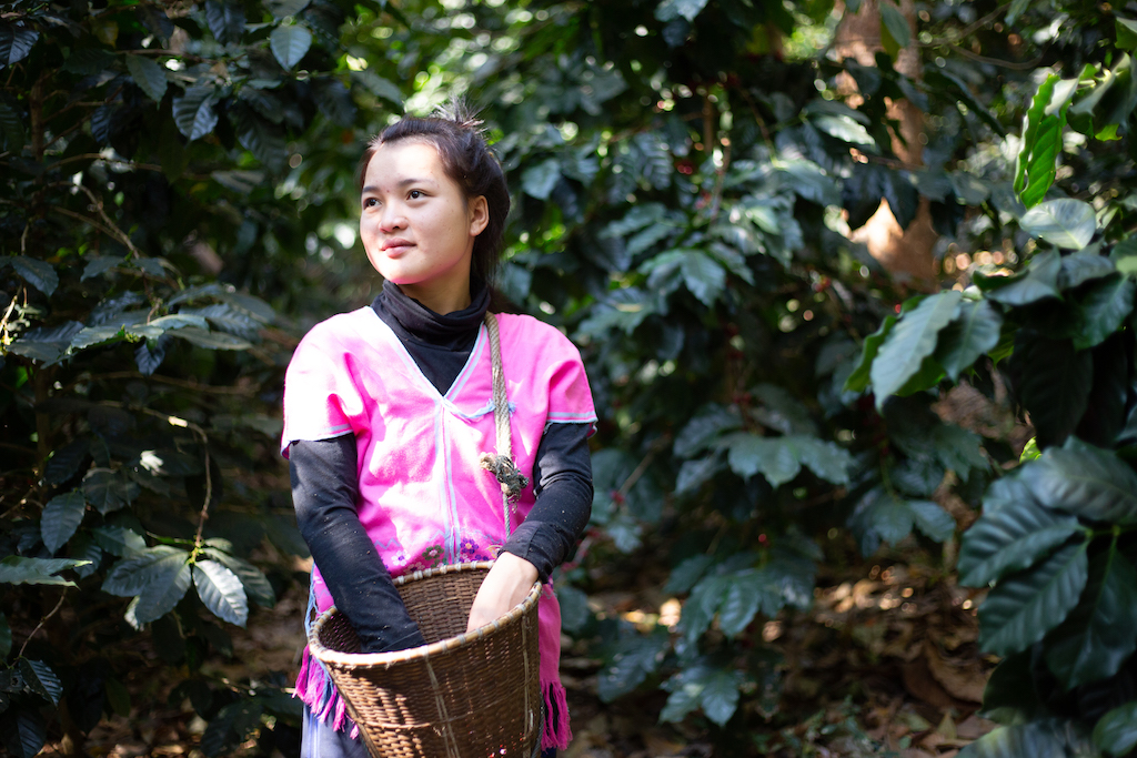 In Thailand, 20-year-old Janjira is wearing a pink Karen shirt. She is outside picking coffee cherries during a school break.
