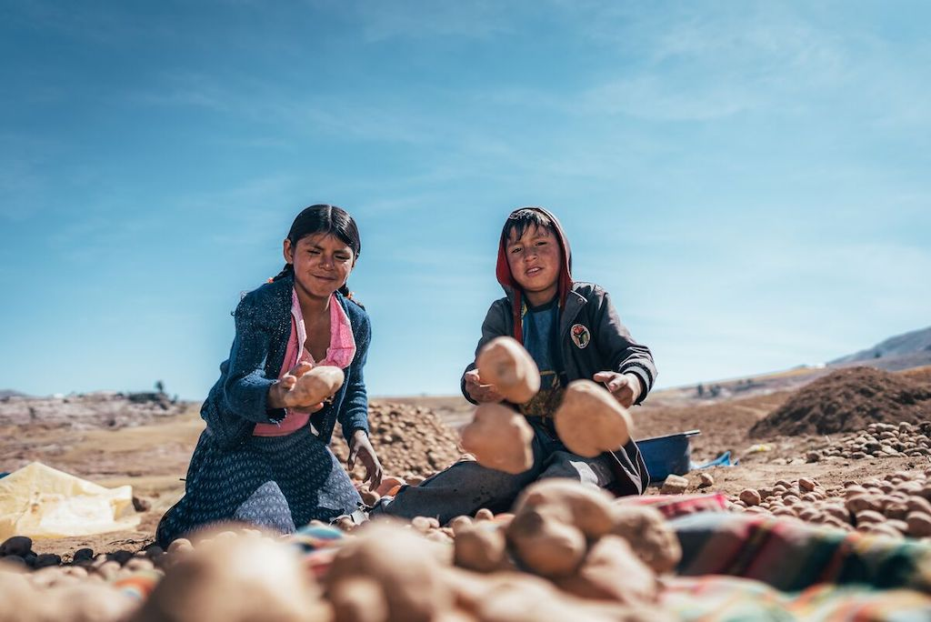 Flora, in a pink shirt, blue sweater, and shirt, is sitting on the ground with her brother as they sort a pile of potatoes.