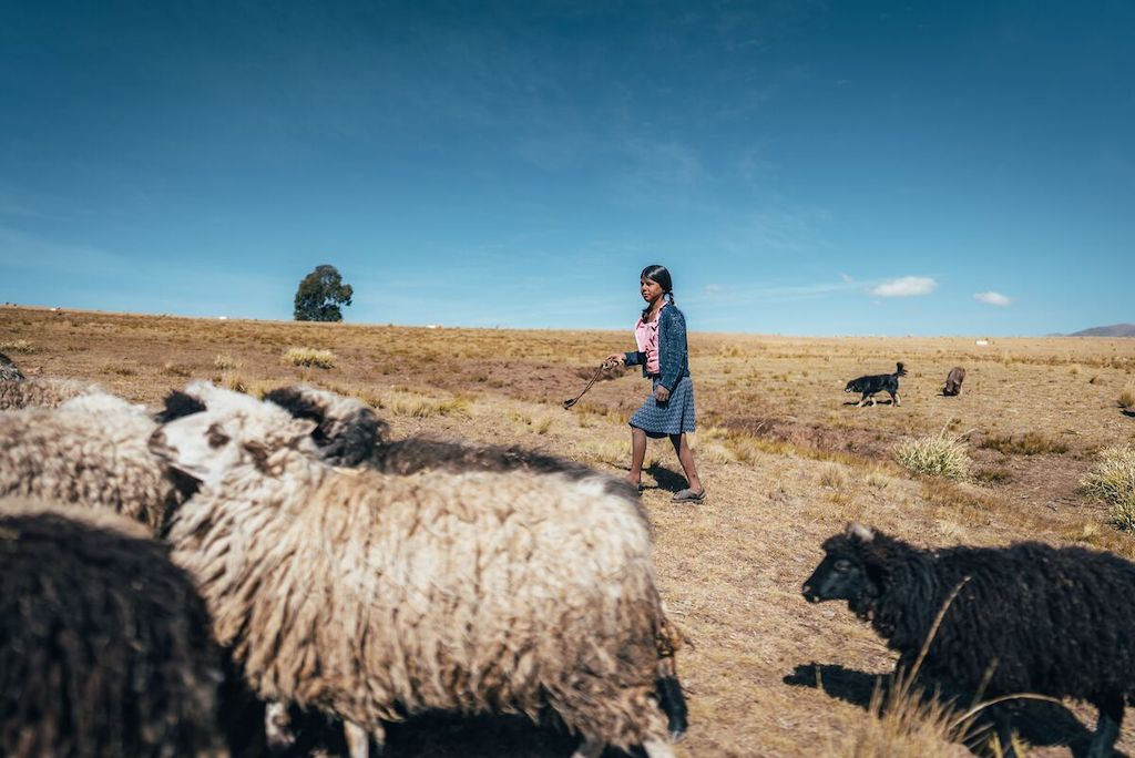 Flora, in a pink shirt, blue sweater and skirt, is walking in a field with some sheep. She carries a slingshot to keep them from straying and to warn other animals away from the flock. There is a dog in the background.