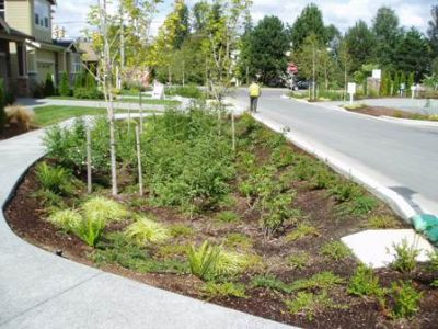 A rain garden between a road & a sidewalk