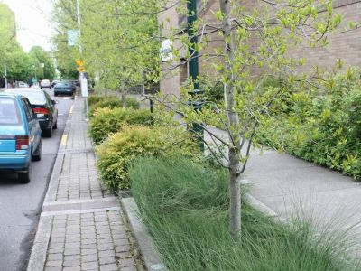 Planting in midlde of sidewalk to help with water drainage