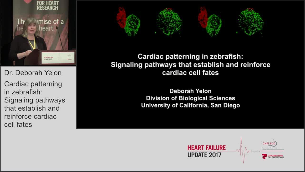 Cardiac patterning in zebrafish: Signaling pathways that establish and reinforce cardiac cell fates