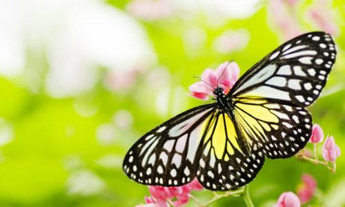 un papillon d sire prendre son envol le rime articles trucs et conseils. Black Bedroom Furniture Sets. Home Design Ideas