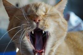 cat-641474__180