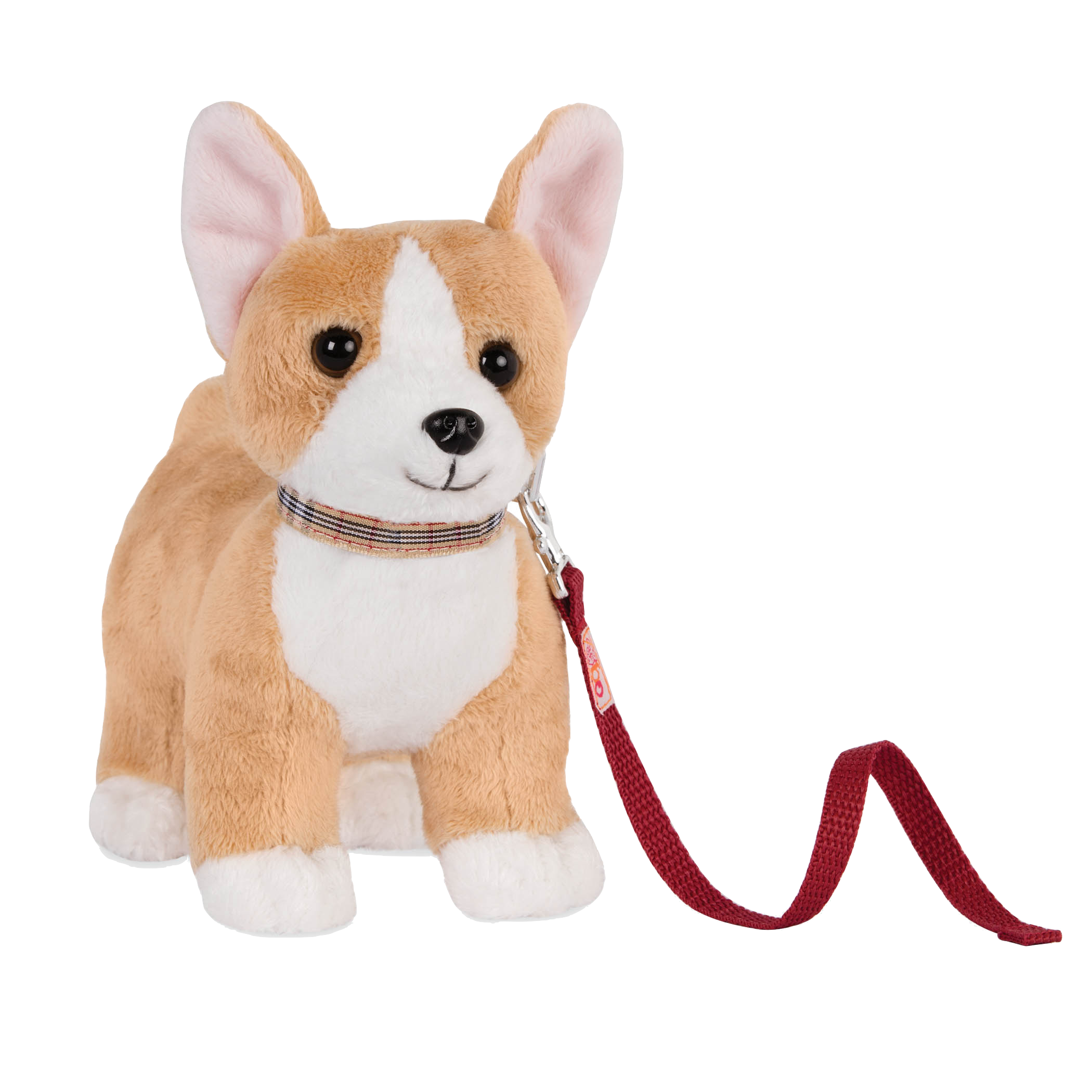 Corgi posing with front paws bent