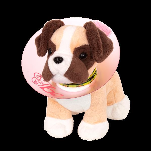 Pup wearing cone around neck