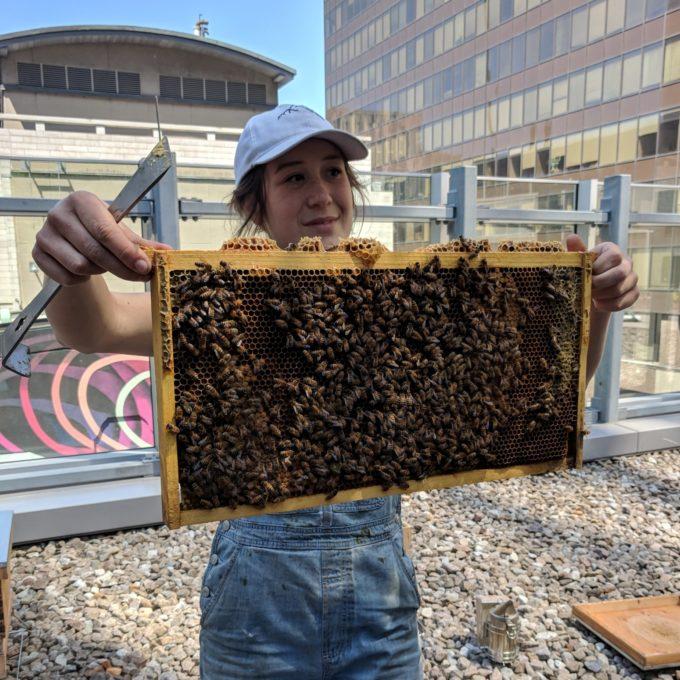 Engagement social - Installation de ruches sur le toit du bureau de Montréal (QC), 2018