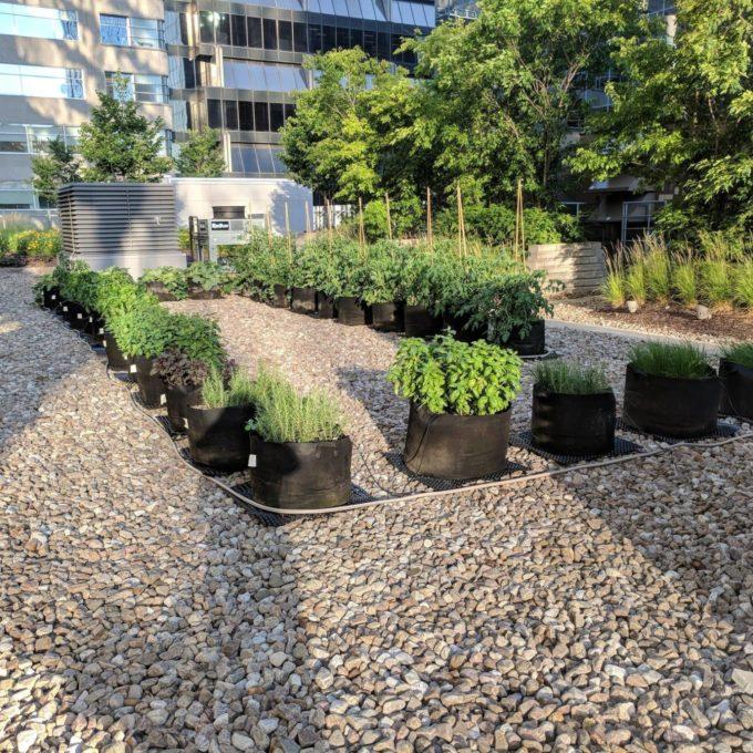 Engagement social - Jardins urbains sur le toit du bureau de BBA à Montréal (QC) 2020